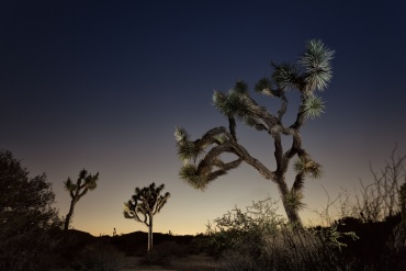 JOSHUA TREE DESERT: LIGHT PAINTING CON UN FLASH www.ishoottravels.com your ticket to travel photography. Blog di fotografia di viaggi. © Galli / Trevisan