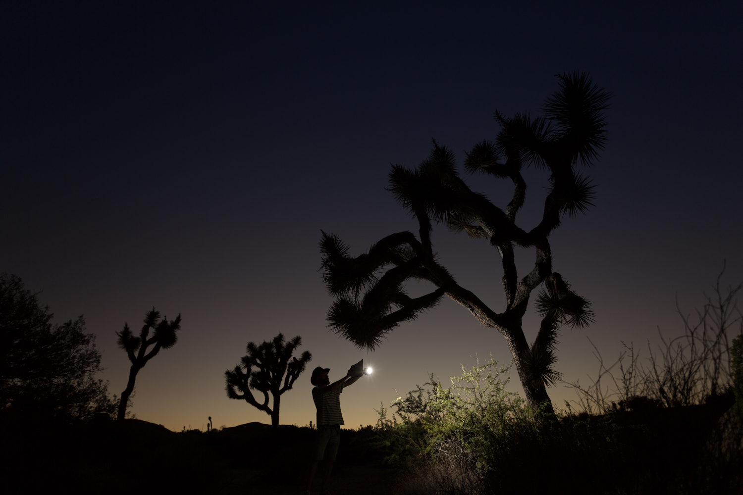 JOSHUA TREE DESERT: LIGHT PAINTING CON UN FLASH
