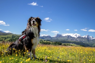 Fotografare il vostro compagno di viaggio a quattro zampe © Anna Koj