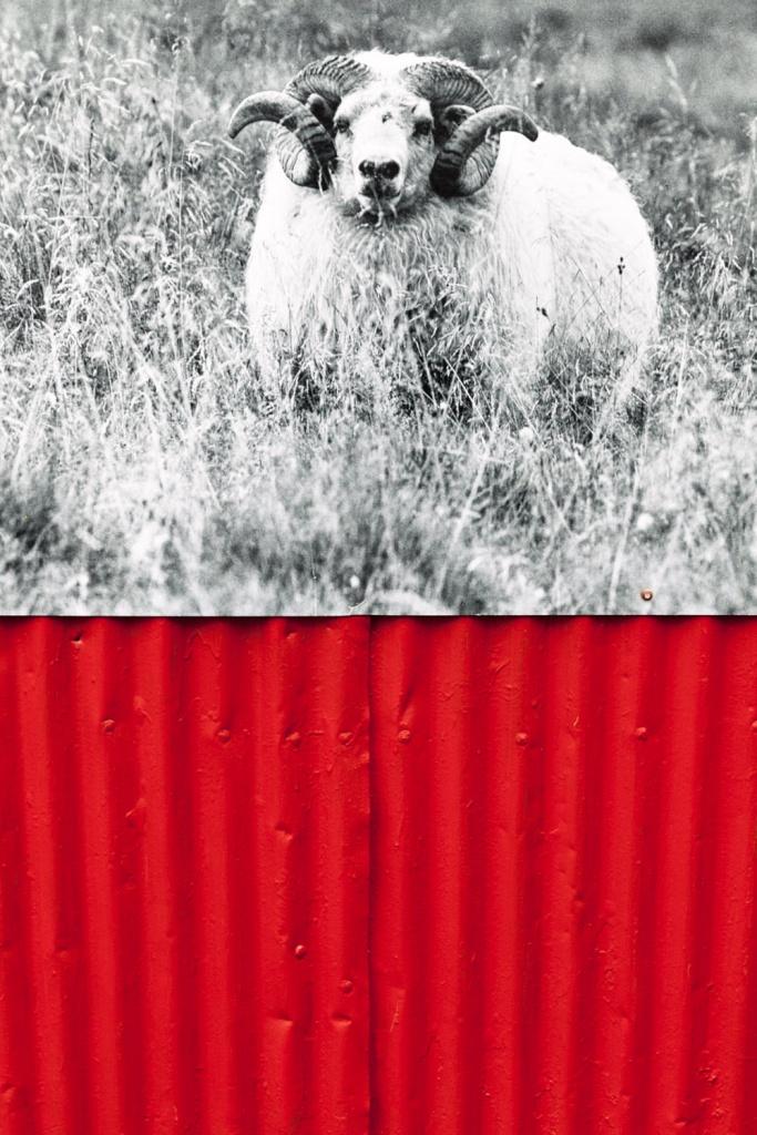 Fotografare Reykjavik - www.ishoottravels.com your ticket to travel photography. Blog di fotografia di viaggi. © Galli / Trevisan